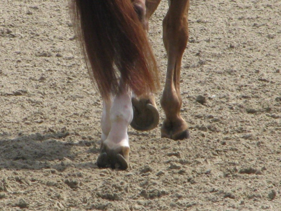 detailed footing Horse